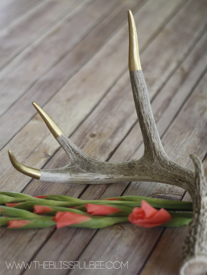 DIY Gold Tipped Antlers | The Blissful Bee featured on Remodelaholic.com #gold #homedecor #diy @Remodelaholic