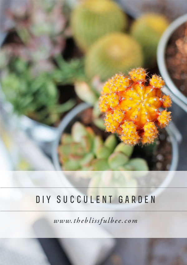 SucculentGarden_pinterest